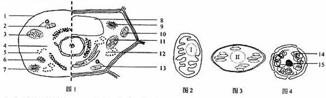 图1是两种高等生物细胞亚显微结构模式图.图2-4是图1