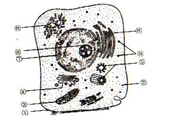 高中生物细胞的结构与功能试题列表 高中生物细胞的分子组成与结构