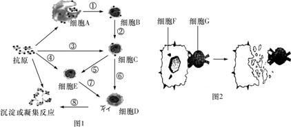 下图为人体体液免疫过程的示意图,关于此图的叙述正确的是 -高中生