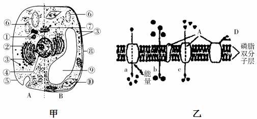 如图是电子显微镜视野中某细胞的一部分,试判断下列关于该细胞叙述中,有几种说法是正确的(  ) 结构1和5中含有DNA 结构1和3在行使其功能时一定有水生成 不含磷脂分子的细胞器是2和3 此细胞一定是真核细胞 此细胞如果是根尖生长点细胞,一定不含有结构2和4 此细胞不能进行有氧呼吸. A.二种 B.三种 C.四种 D.全正确