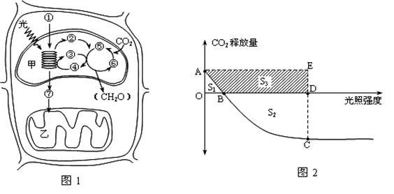 (17分)下图1表示绿色植物叶肉细胞部分结构中