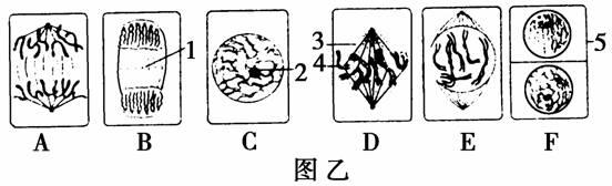 下图甲、乙、丙表示某二倍体生物细胞有丝分裂和减数分裂过程中DNA含量的变化。请回答相关问题:  (1)图中ab段上升的原因相同,均是________________。 (2)图甲中bc段处于有丝分裂的______________期,此时染色体与染色单体的数目之比为______________ ;在减数分裂中,处于图甲bc段的细胞中 ____________(填可以或不可以)含有同源染色体。 (3)图甲、丙中,cd段下降的原因分别是________________________________、 ____