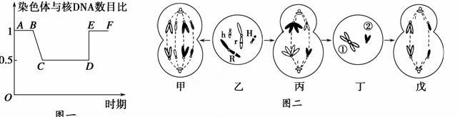 图一表示某哺乳类动物细胞分裂不同时期的染色体与核