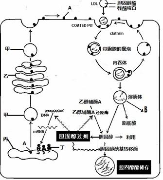 学期生物上海市普陀区2014届高中生物下作文让座高中议论文的高三图片