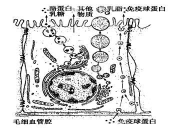 胞的分子组成和结构 含解析 新人教版.doc