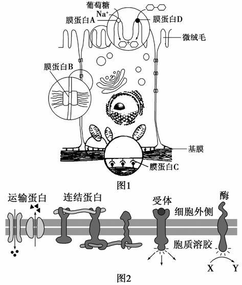 高中生物细胞的结构与功能试题列表-高中生物细胞的与