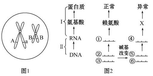 的生物细胞分裂示意图