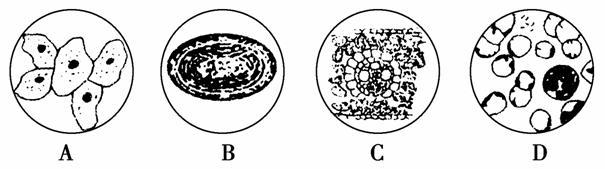 科学家依据______________将细胞分为原核细胞和真核细胞,属于原核细胞的是________(填字母)。图中能进行光合作用的是________(填字母),A、B所示细胞都有的细胞器是________。提取细胞膜时通常选用D图中的________细胞,原因是____________________________。