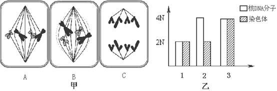 与动物细胞相比,植物细胞有丝分裂末期出现的特有