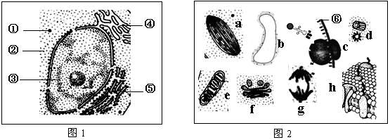 高中生物细胞的结构与功能试题列表-高中生物细胞的