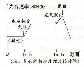 下图是水生植物黑藻在光照等环境因素影响下光合速率变化的示意图 请回