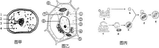 下面是两类细胞的电子显微镜结构模式图,请据图回答