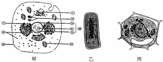 在生物体内,某些重要化合物的元素组成和功能关系如下图所示。其中A、B、C是生物大分子。请据图分析回答:  (1)请在图中横线上分别写出两种重要有机物A和C的元素组成(除C、H、O外)_______、_______。 (2)B彻底水解的产物是_____________________。 (3)反应过程为