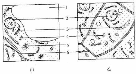 乙两图是某植物叶肉细胞和根尖分生区细胞某部分