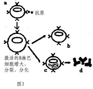 (1)图1是实验小鼠的反射弧结构模式图