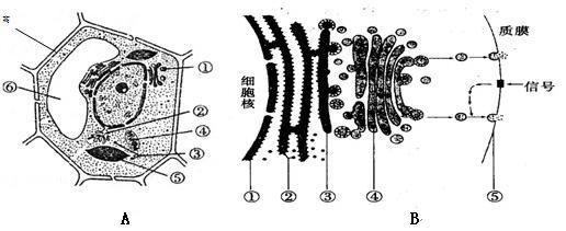 a图为某植物细胞的亚显微结构模式图,b图示某动物细胞