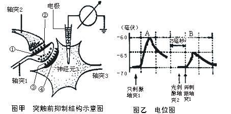 突触结构示意简图