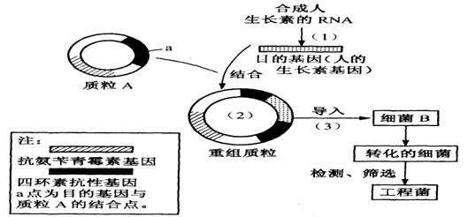 (3)检测大肠杆菌b是否导入了质粒或重组质粒