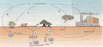 下图为自然界氮循环示意图