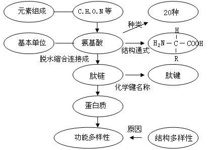 蛋白质分子结构与功能概念图