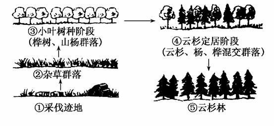 在⑤云杉林群落中有明显的垂直结构