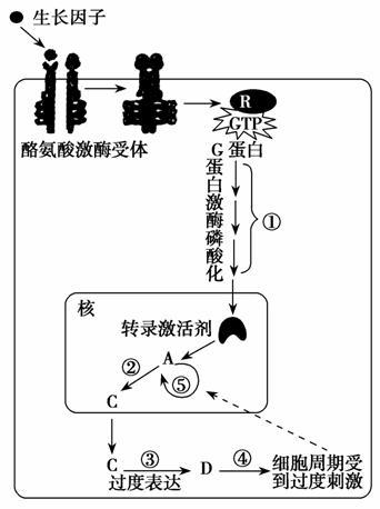 一阶动态电路的过渡过程