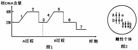 下图1表示某种哺乳动物生殖腺细胞中细胞核dna含量的
